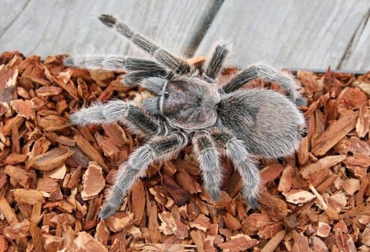 best tarantula bedding