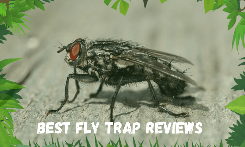 Best Fly Trap Reviews