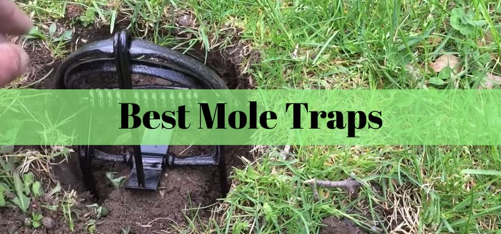 Best Mole Traps For 2019 Insect Hobbyist