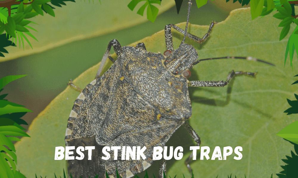 Best Stink Bug Traps