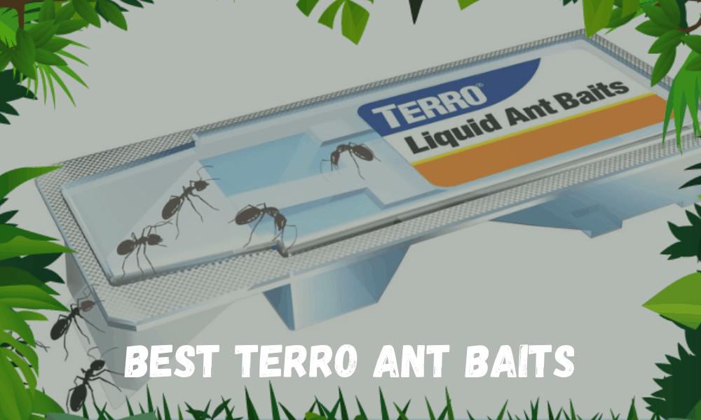 Best Terro Ant Baits