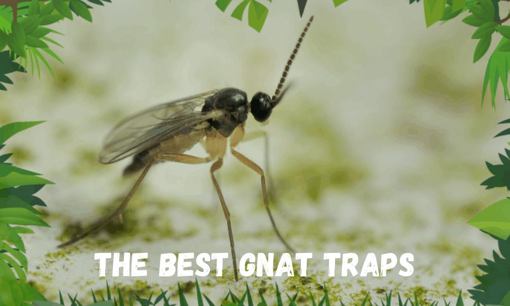 THE Best Gnat Traps