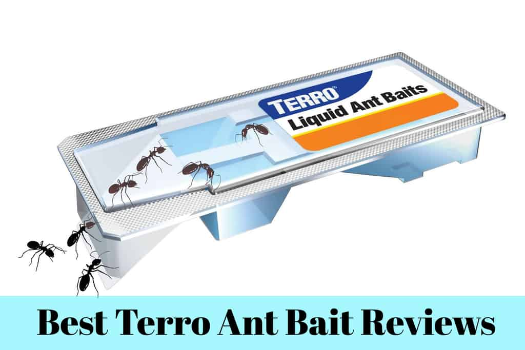 Best Terro Ant Bait Reviews Insect Hobbyist