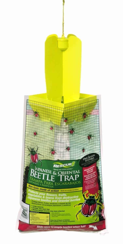 ladybug-traps