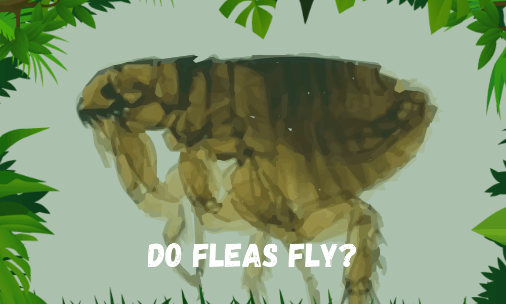 Do Fleas Fly