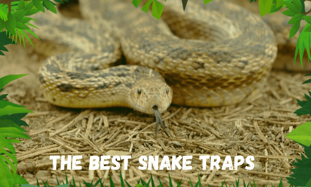The Best Snake Traps