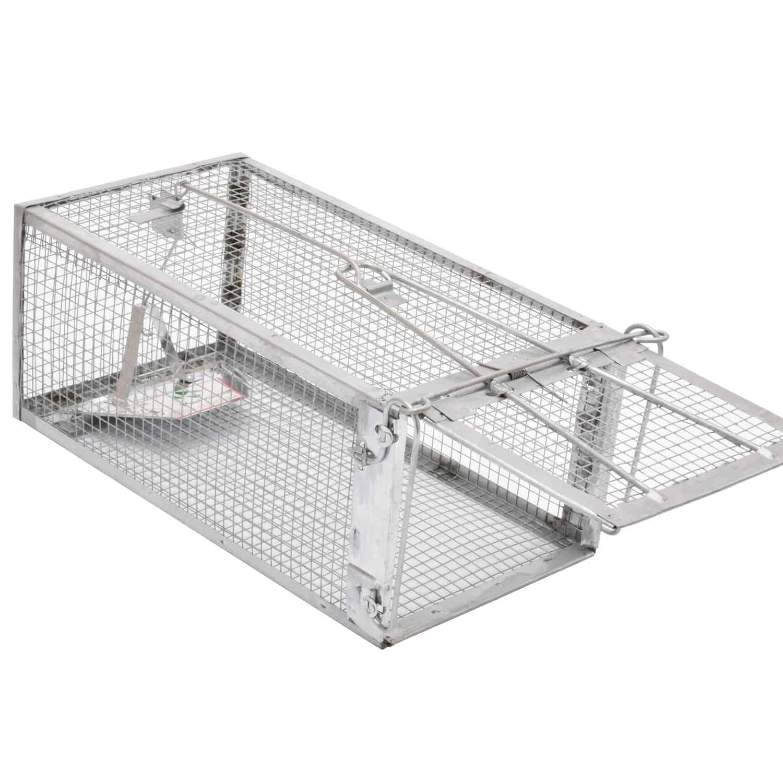 squirrel-trap-bait
