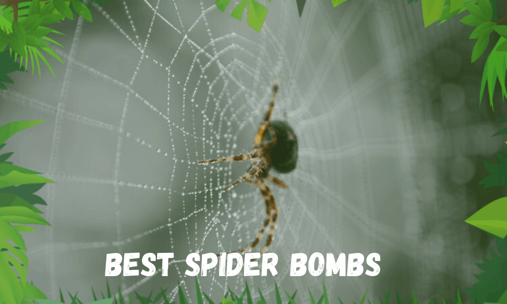 Best Spider Bombs