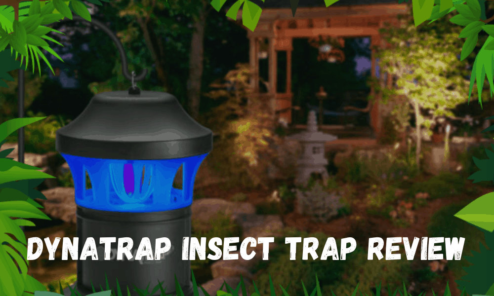 Dynatrap Insect Trap Review