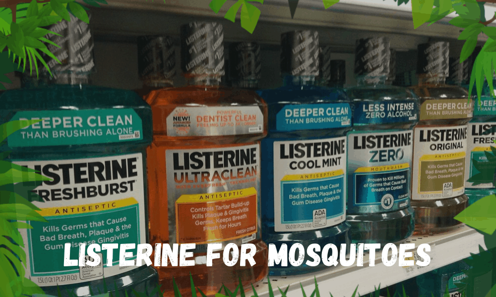 Listerine For Mosquitoes